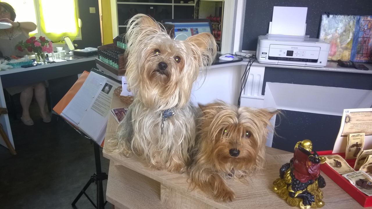 Bandy et Mickette en gardien des lieux