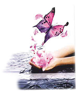 Belle zen papillon