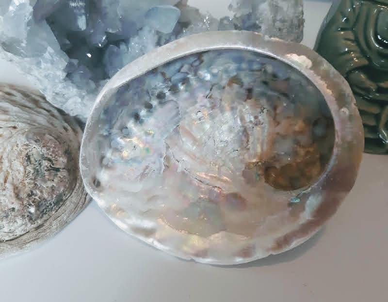 Coquille d ormeau veritable encensoire esoterique fumigation encens du monde miss terre et ciel albert 2