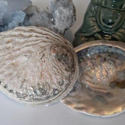 Coquille d ormeau veritable encensoire esoterique fumigation encens du monde miss terre et ciel albert