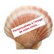 Coquille saint jacques pour la purification personnalisee a l image de votre choix